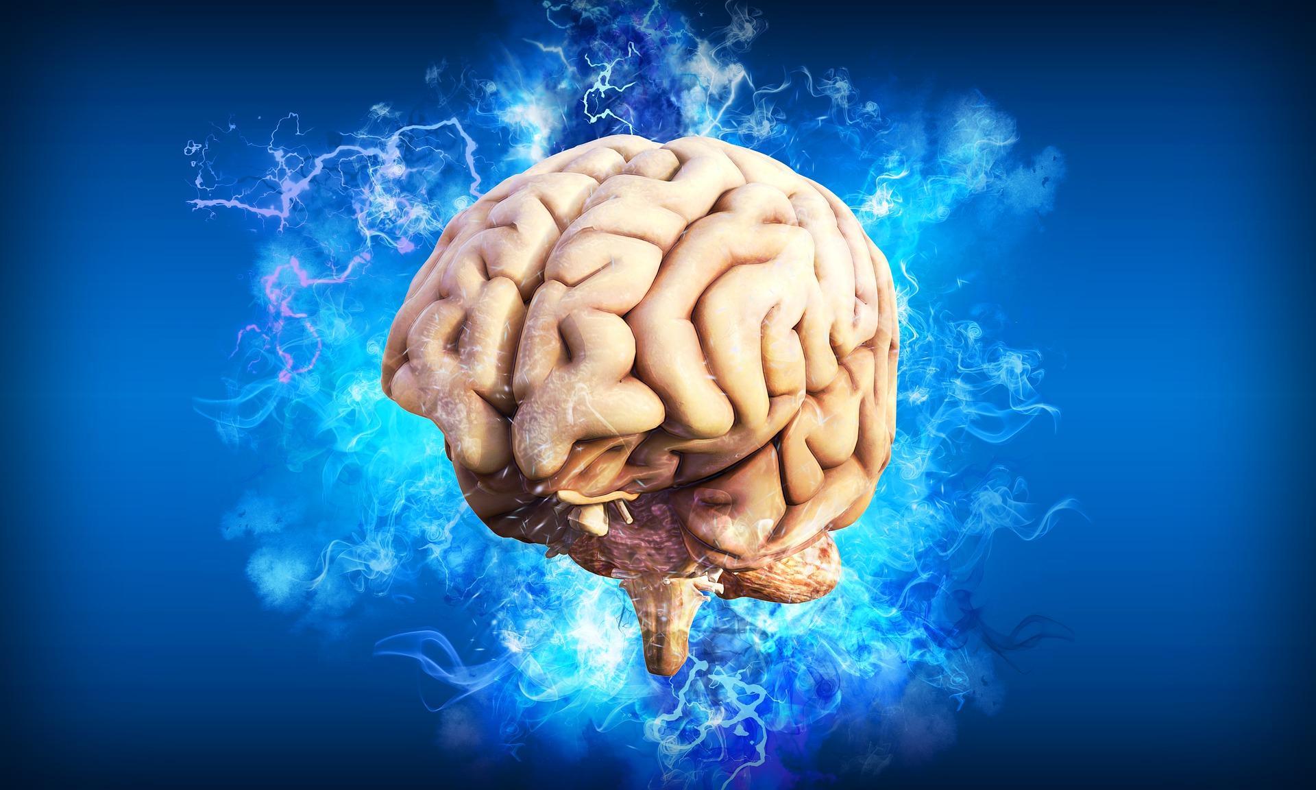 trening-i-mozak